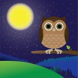 Сыч ночи леса Стоковая Фотография