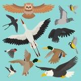 Сыч пташки летания шаржа вектора птицы нырнул и утка с аистом или ласточкой bullfinch иллюстрации крылов пера установленными для Стоковая Фотография RF