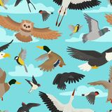 Сыч пташки летания шаржа вектора птицы нырнул и утка с аистом или ласточкой bullfinch иллюстрации крылов пера установленными для Стоковое фото RF