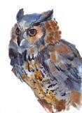 Сыч, птица, акварель, эскиз, краска, животные, иллюстрация Стоковое Изображение RF