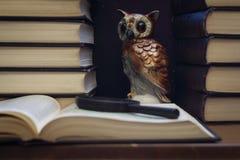 Сыч среди стогов книг стоковое фото