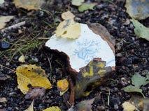 Сюрприз в лесе Стоковое фото RF
