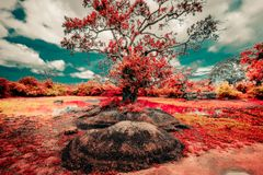 Сюрреалистические цвета и ландшафт фантазии природы Шри-Ланка дикой стоковое фото rf