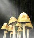 Сюрреалистический лес гриба, грибы, природа Стоковое фото RF