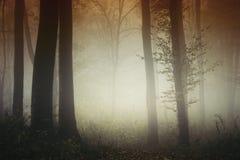 Сюрреалистический свет в загадочном лесе Transylvanian стоковые фото