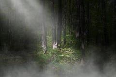 Сюрреалистический темный лес, предпосылка древесин Стоковые Фото