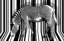 Сюрреалистическая зебра Стоковая Фотография RF