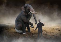 Сюрреалистический слон думает, идеи, нововведение Стоковая Фотография