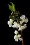 сярприз весны Стоковое Фото