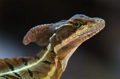 Ся дракон Стоковое фото RF