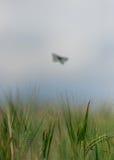 Слабая бабочка Стоковые Фотографии RF