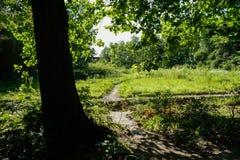 Слабый перекрестный путь в солнечном после полудня лета Стоковые Изображения RF