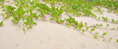 Слава утра пляжа стоковые фотографии rf