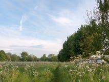 Славная дорожка пути через луг сельской местности с деревьями и Стоковое Изображение RF