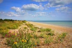 Славная природа Кент Англия пляжа wildflowers стоковое фото rf