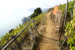 Славная прогулка через ярд вина морем стоковые изображения rf