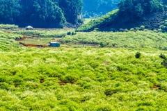 Славная плантация сливы в плато Moc Chau, Вьетнаме Стоковое Изображение