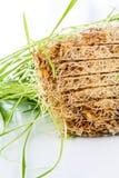 Славная трава пшеницы Стоковая Фотография RF
