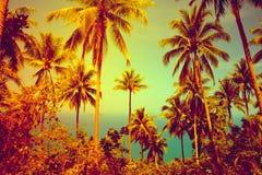 Славная тропическая предпосылка Стоковое Изображение