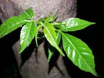Славное дерево Стоковые Фото