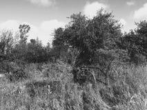 Славное поле с сельскохозяйственным оборудованием Стоковое фото RF