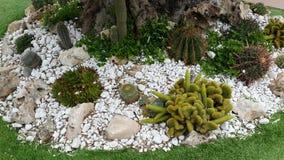Славное фото разнообразия кактуса от Америки Стоковое Изображение