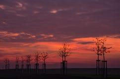 Восход солнца с переулком дерева Стоковая Фотография