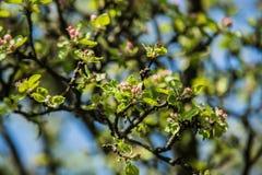 Славные деревья во время зацветать весной Стоковое Изображение RF