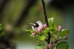 Славные деревья во время зацветать весной Стоковые Фотографии RF