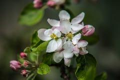Славные деревья во время зацветать весной Стоковая Фотография