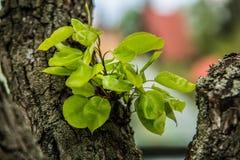 Славные деревья во время зацветать весной Стоковые Изображения RF