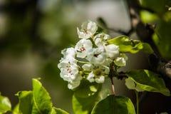 Славные деревья во время зацветать весной Стоковые Фото