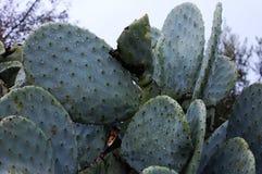 Славные листья с красивым зеленым цветом Стоковые Фото