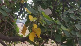 Славные лист цвета Стоковая Фотография