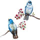 Славные птицы акварели вектора Стоковое Изображение RF