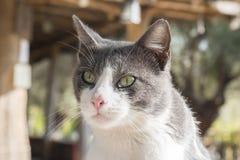 Славные цвета кота, серых и белых Стоковые Фото