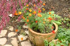 Славные цветки в саде Стоковая Фотография RF