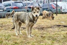 Славный бездомный щенок в городе Стоковая Фотография RF