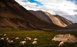 Славный взгляд горной цепи Leh Ladakh Стоковые Изображения RF
