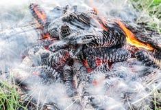 Славный взгляд горящих конусов сосны в дыме и огне Стоковые Изображения