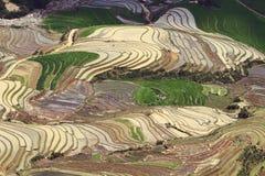 Славный взгляд террасных полей от горного пика Стоковое фото RF