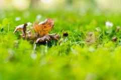 Славный зеленый луг с зеленой травой стоковое изображение rf