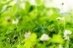 Славный зеленый луг с зеленой травой стоковые фотографии rf