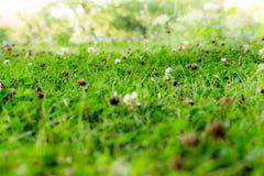 Славный зеленый луг с зеленой травой стоковая фотография rf