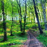 Славный с дороги в лесе Стоковая Фотография