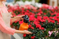Славный флорист работая с цветками Стоковая Фотография