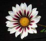 Славный цветок весны Стоковые Изображения RF