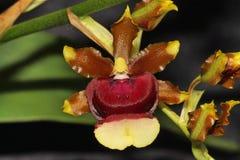 Славный цветок орхидеи стоковые изображения
