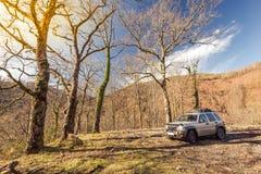С автомобиля дороги припаркованного в одичалом лесе Стоковые Изображения RF