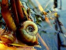 Сланцы реки Стоковое фото RF